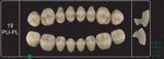 Creation Creopal Shell Teeth Mould SPU19, 8er
