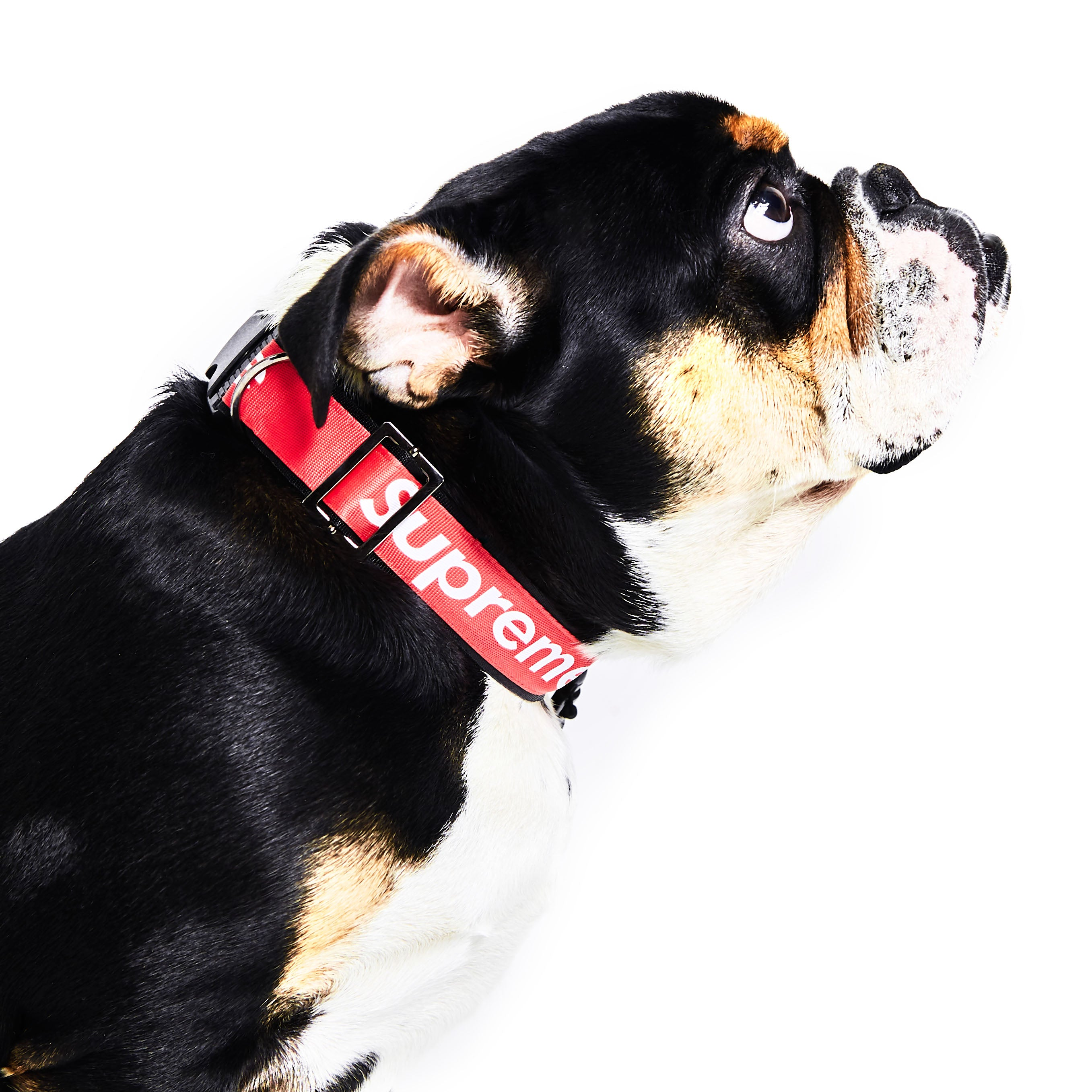 Supreme Leash & Collar Set