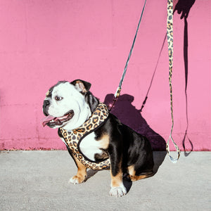 Leopard + Zebra Reversible Harness and Leash Set