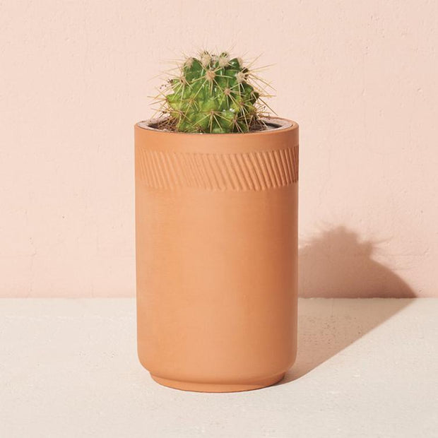 Modern Sprout - Terracotta Kit Cactus