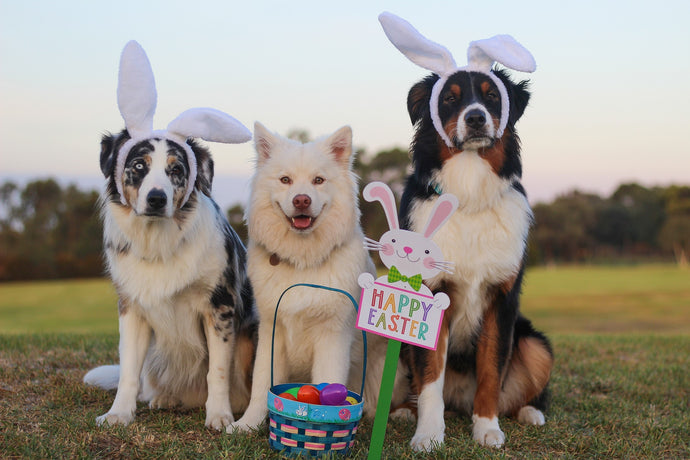 5 fun things to do with your pooch this Easter
