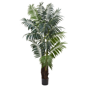 7.5' Bulb Areca Palm Tree