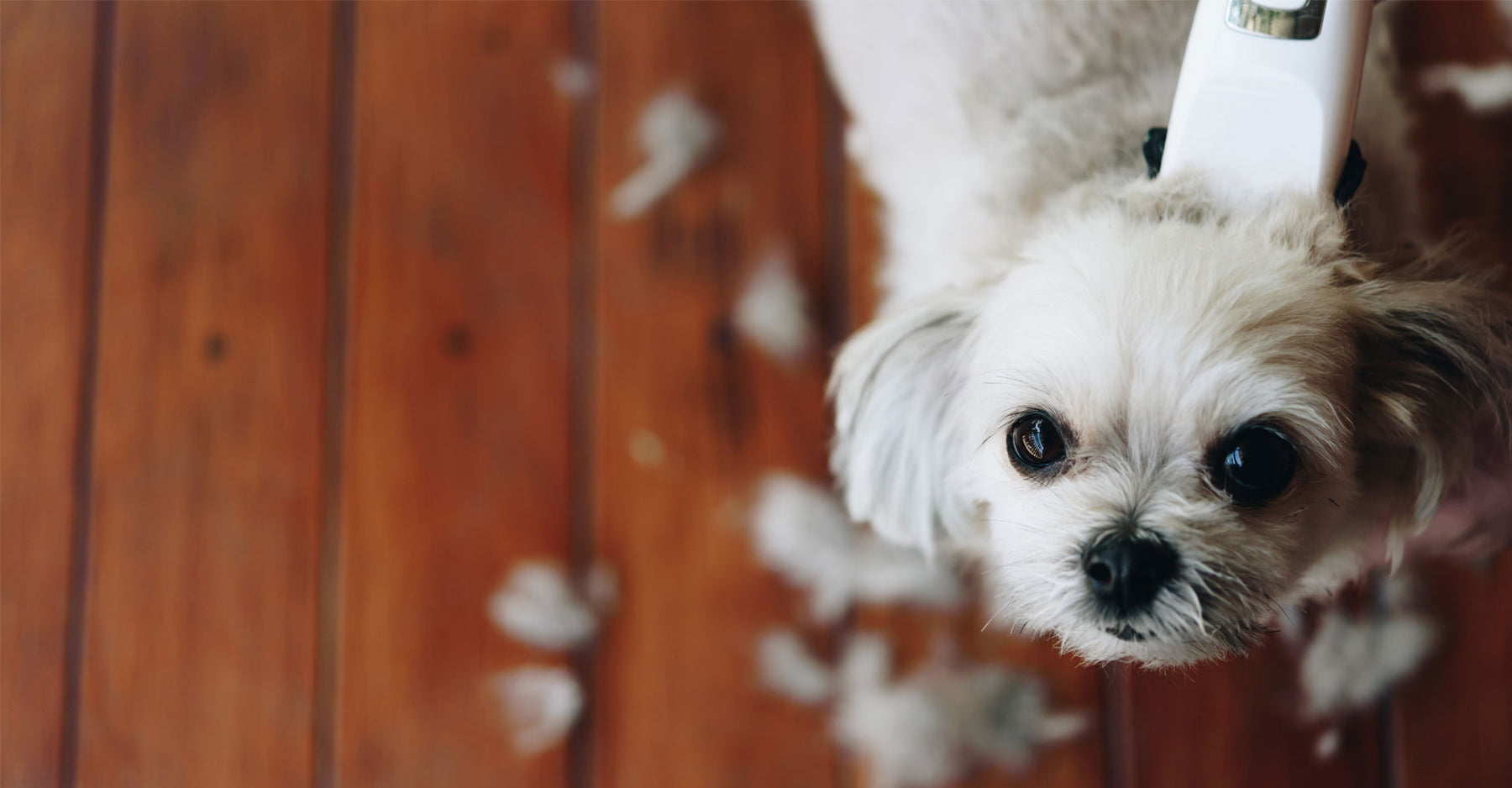 4 Reasons You Shouldn't Shave Your Double Coated Dog