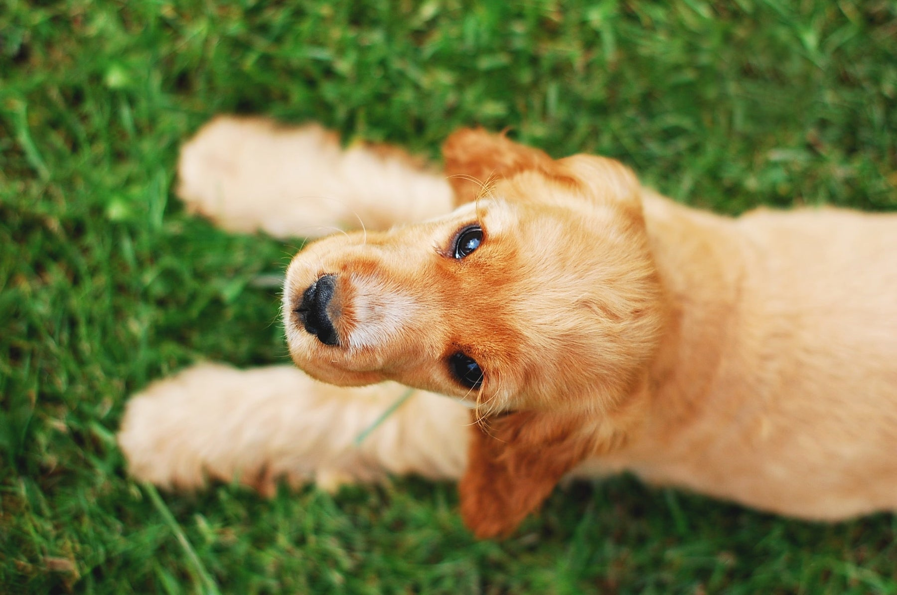 5 Easy Ways to Teach Your Dog Impulse Control