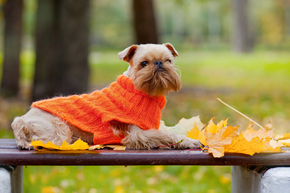 6 Cute Sweaters You Can Make for Your Dog