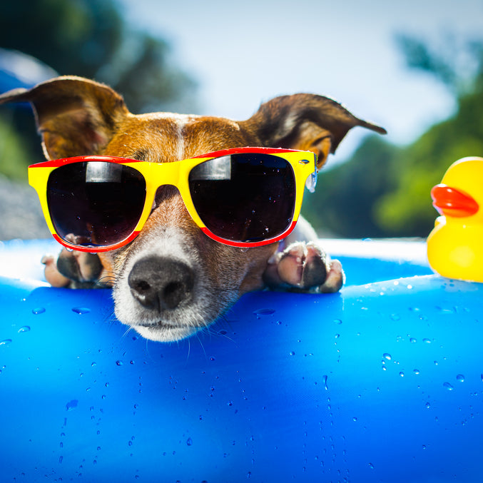 11 Ways to Keep Your Dog Cool This Summer