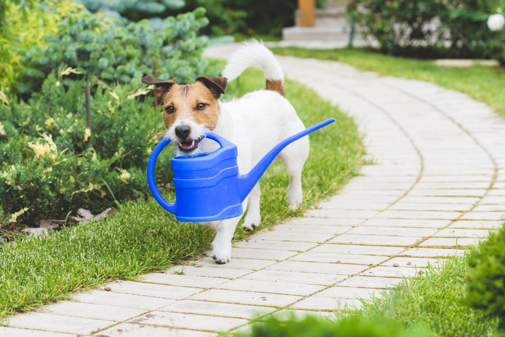 11 Outdoor Plants that are Safe for Your Dog
