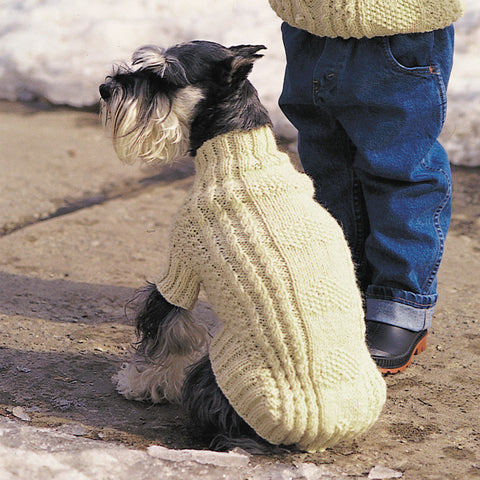 Small Scottish Terrier wearing cream color sweater; toddler in jeans/matching sweater from waist down.
