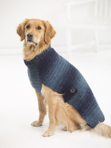 Golden retriever sitting, wearing navy ombre dog sweater.
