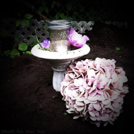 wet, fresh-turned soi. 6 in. white cement birdbath with glitter solar jar & flower petals within. Full hydrangea bloom on right-side ground. Evening gloaming.
