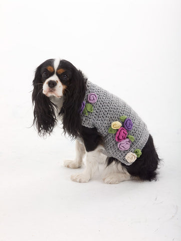 Cocker Spaniel wearing light gray sweater with crochet roses.