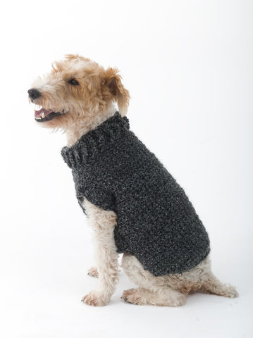 Small mix dog wearing gray sweater with collar.
