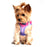 American River Choke Free Dog Harness by Doggie Design - Ombre Collection Raspberry Sundae