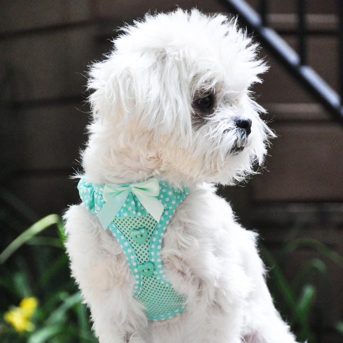 American River Choke-Free Dog Harness Polka Dot Collection Teal by Doggie Design