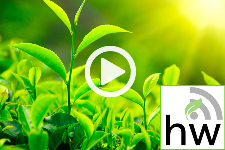 Listen to Every HerbWorks Podcast!