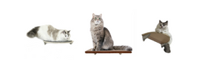 Purrfectly Catastic Creations, handcrafted wall mounted cat furniture, cat climbing furniture, cat step, cat steps, cat shelf, cat shelves, cat stairs, cat stairs for walls, cat perch, cat tower, cat tree, catify, catification, cat superhighway