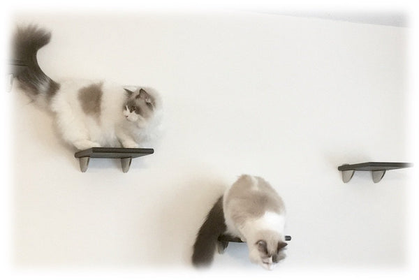 Cat Tree Wall Tower  (Set of 7) | 2 Cat Shelves, 3 Cat Steps, 2 Cat Post Steps