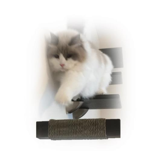 Purrfectly Catastic, cat cats kitten kitty modern contemporary wall mount mounted indoor shelf shelves shelving step steps stairs bed corner condo tower hammock house perch perches furniture climbing handcrafted tree trees tower towers wave modular wood w