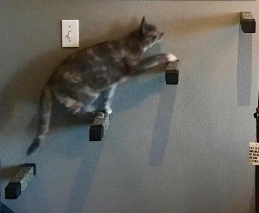 wall mounted cat stairs