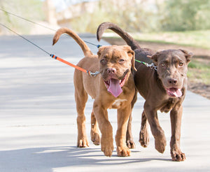 Two Dogs walking with Retractable Leash for two dogs by wigzi