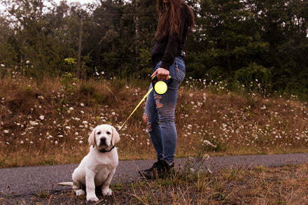 woman walking dog with 360 Degree Reflective Retractable Dog Leash With Gel Handle