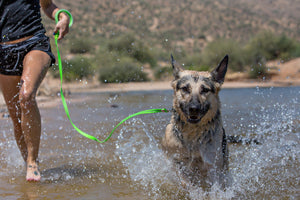 dog playing in lake with waterproof dog leash