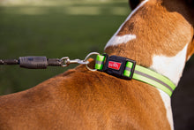 Load image into Gallery viewer, Dual Doggie Rope Lead for Medium to Large Dogs attached to dog's collar