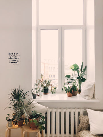 how houseplants can clean the air