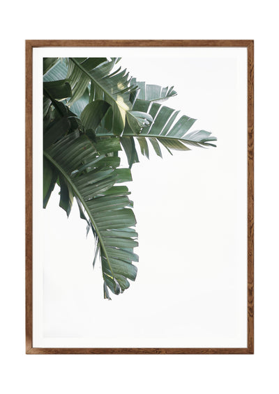 Botanical Print Banana Leaf Portrait 2