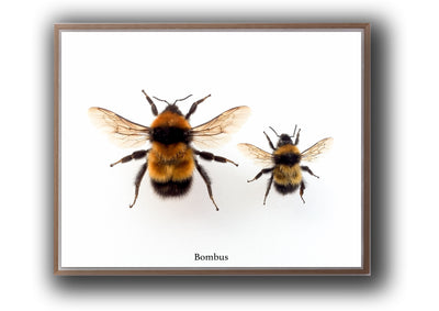 Arthropod Print Bumble Bee Duo Landscape