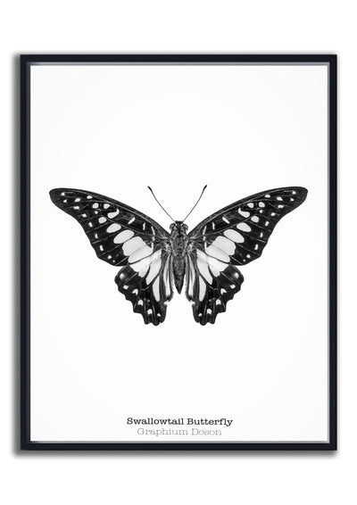 Arthropod Print Butterfly Portrait 1