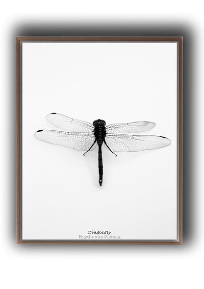 Arthropod Print Dragonfly Portrait
