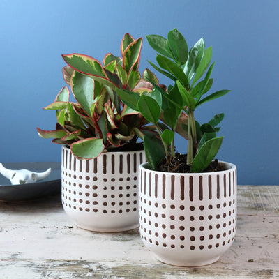 African speckled pot