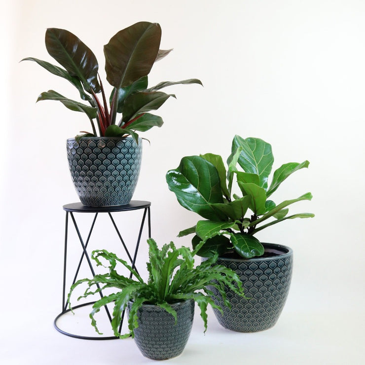TABLE BAY SPECIAL - Tall stand with free plant & pot