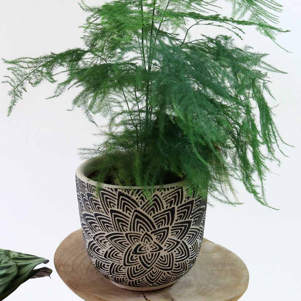 Lotus pot black