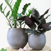 Ceramic belly pot brown