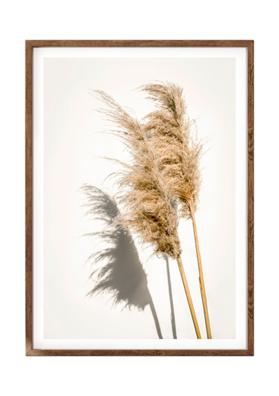 Botanical Print Pampas Grass Portrait 3