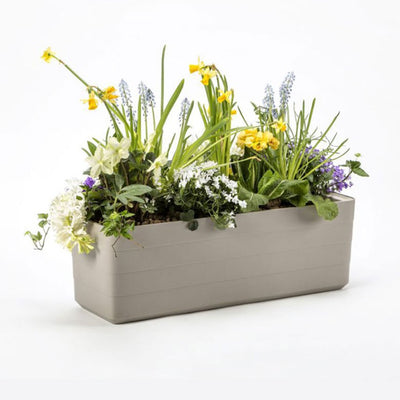 Berberis self-watering planter 60