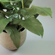 Orb planter cement grey - only one left