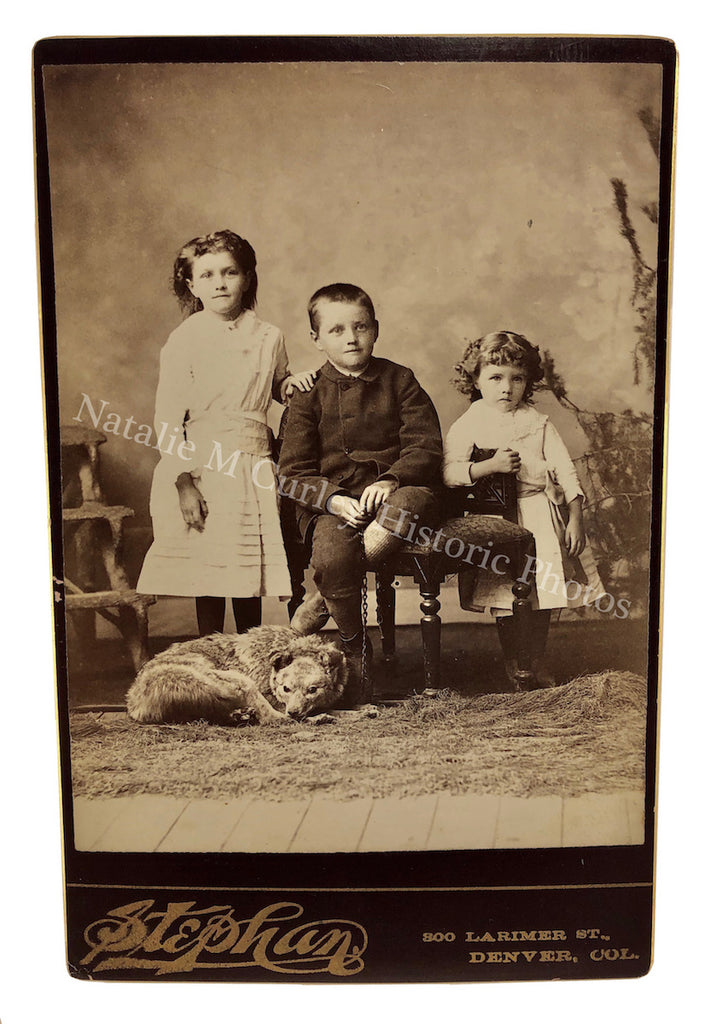 19thc Children Coyote Taxidermy Denver CO Studio Cabinet Photo