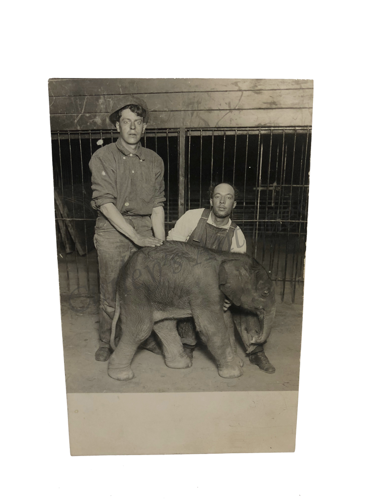 Vintage 1920s Circus Zoo Elephant Animal Trainers RPPC Photo