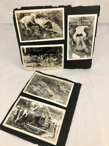 1920s Ohio Mastodon Skeleton Archeology Dig RPPC Photos