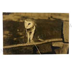 Vintage 1920s Tethered Barn Owl Signed Animal Photo RPPC