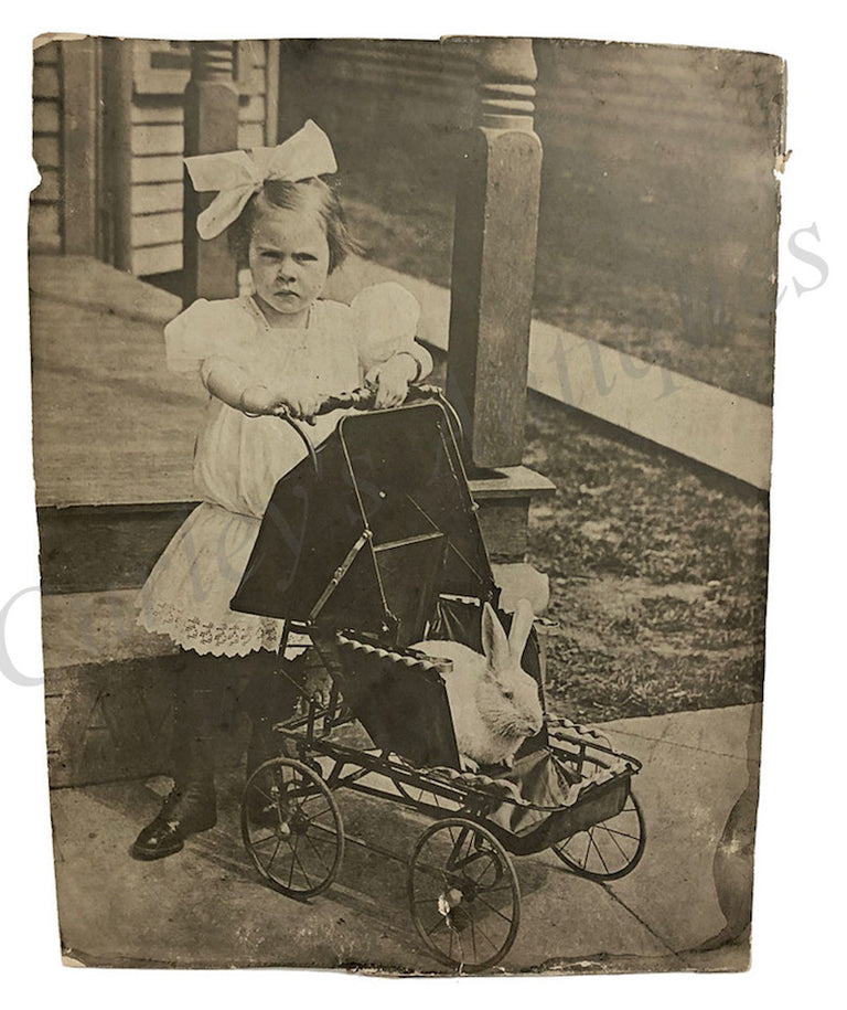 Victorian 1910s Sour Faced Girl w/ Pet Rabbit Photo