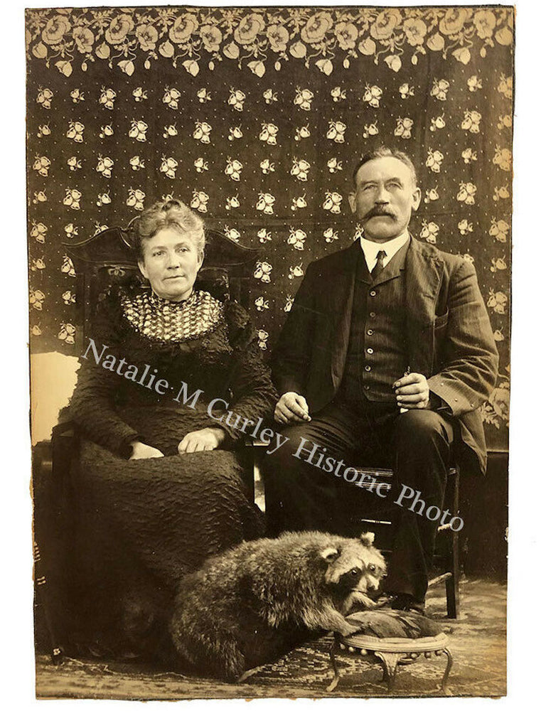 1900s American Gothic Taxidermy Raccoon Calico Photo
