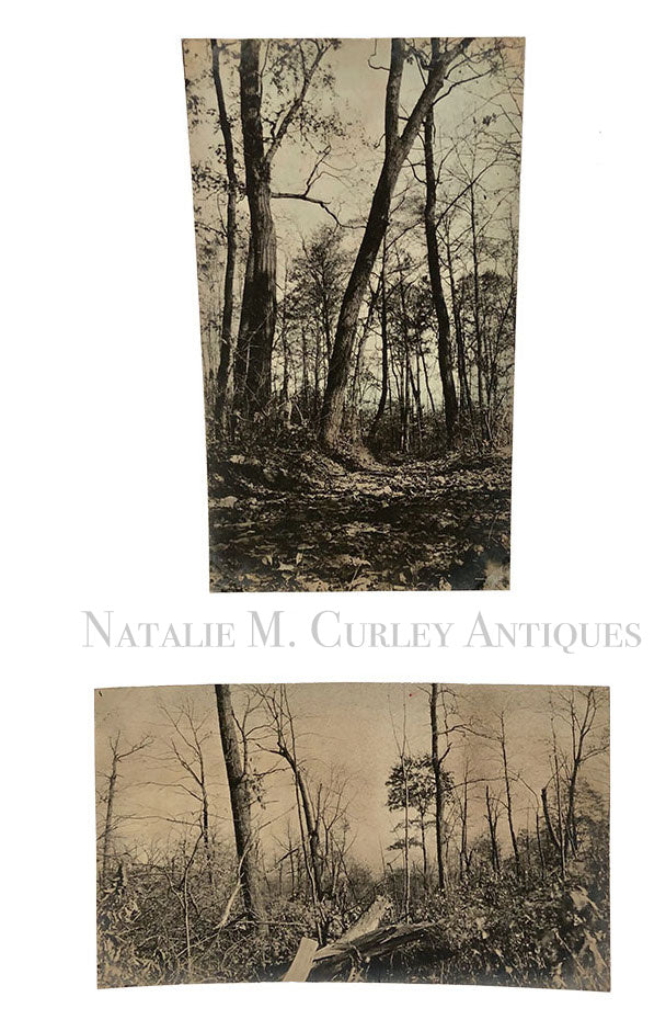 Antique 1900 Forest Interiors Silver Gelatin Nature Art Photos