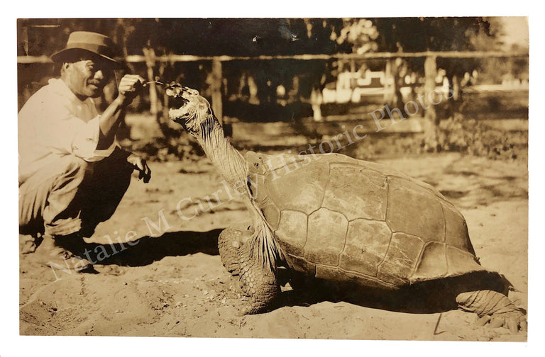 1910s Giant Tortoise (Galapagos) Sepia Photo RPPC