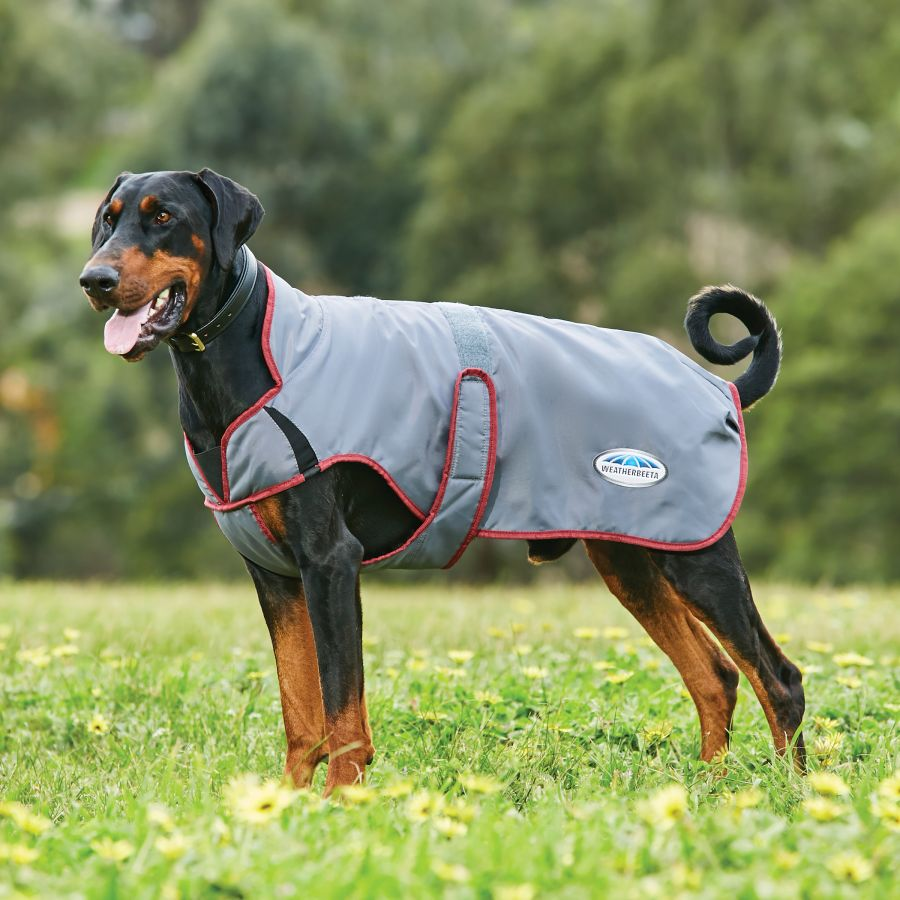 Weatherbeeta Comfitec Windbreaker Free Deluxe Dog Coat