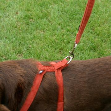 The Good Dog Company Rust Corduroy Hemp Harness