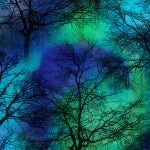 Northern Lights Trees - COBALT